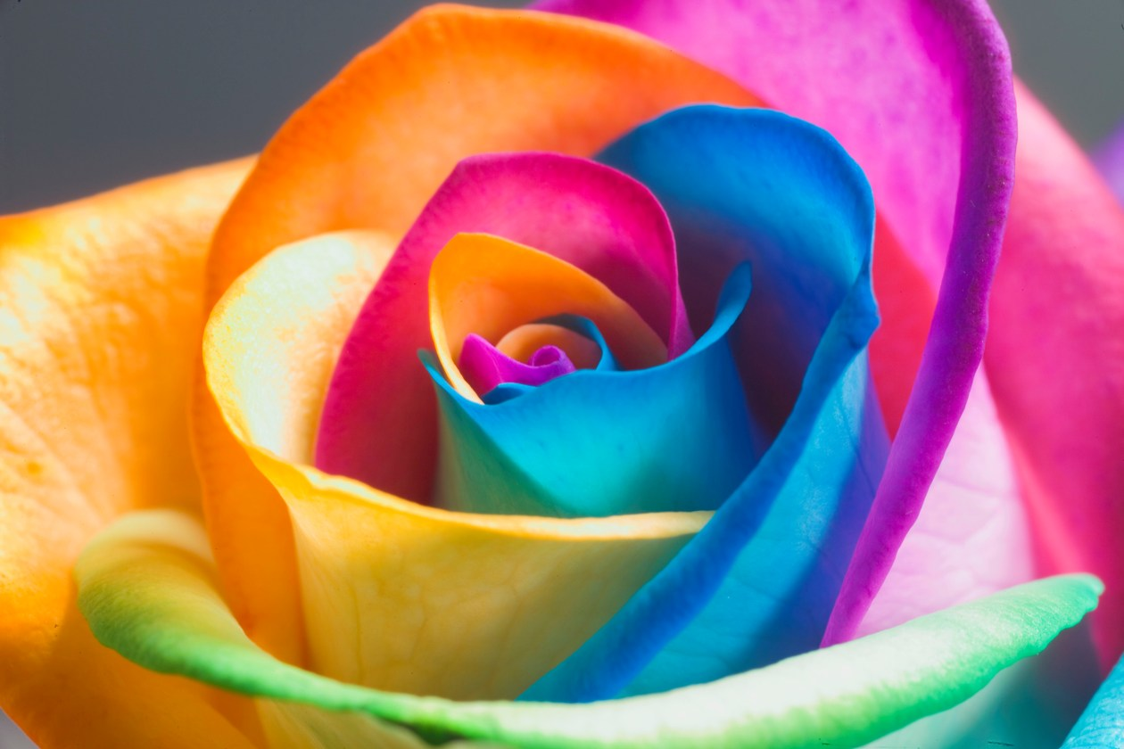 Disability black women have it going on for Rainbow dyed roses